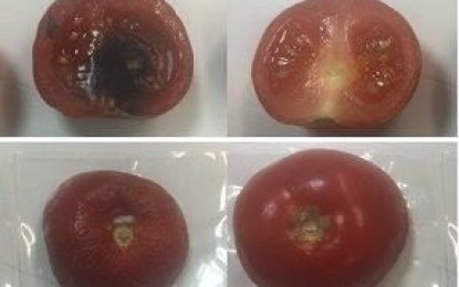 Clay-based antimicrobial packaging keeps food fresh
